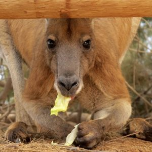 「ワラビーはカンガルーより小さくて顔も中心に寄ってシュッとなっている。」~pointの使い方~