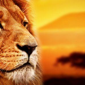 英語の発音のためにライオンキングを歌いました~大地から湧いてくるイメージでの発声~